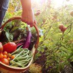 Organic Food Growing - for Back Yard Farmers!
